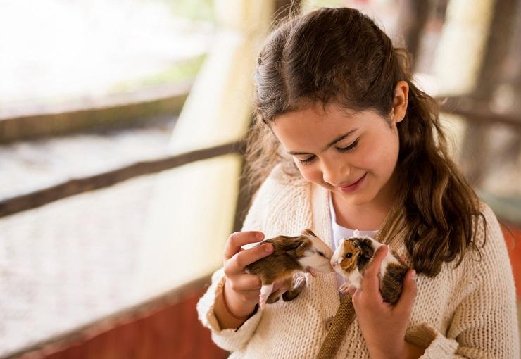 Condizionatore a noleggio per un negozio di animali blog for Noleggio cabina julian dal proprietario